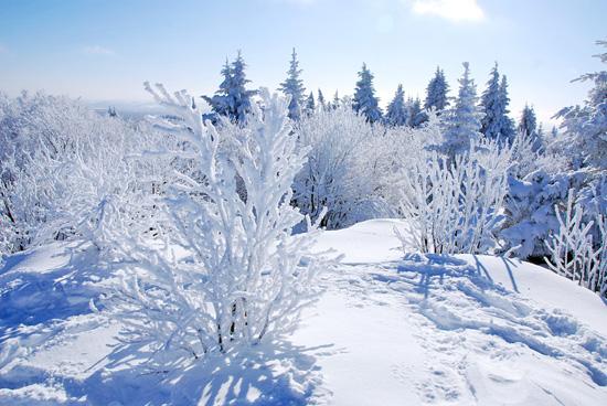 Le monde enchanté des Branches-Neige