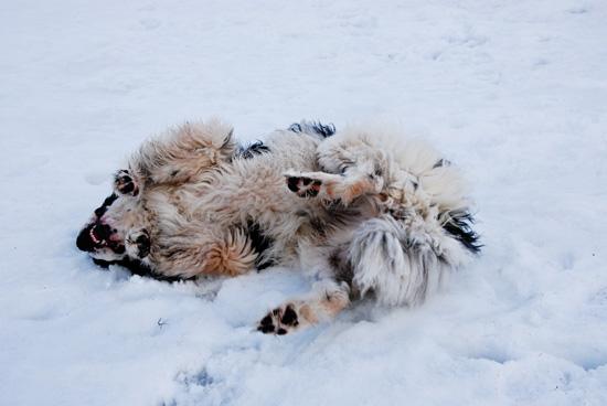 La vie révolutionnaire d'un chien des neiges